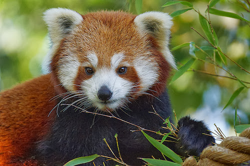 Some fascinating animals that are endangered