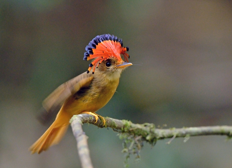 Fascinating Birds: Extremely Colorful and Cool-looking Birds