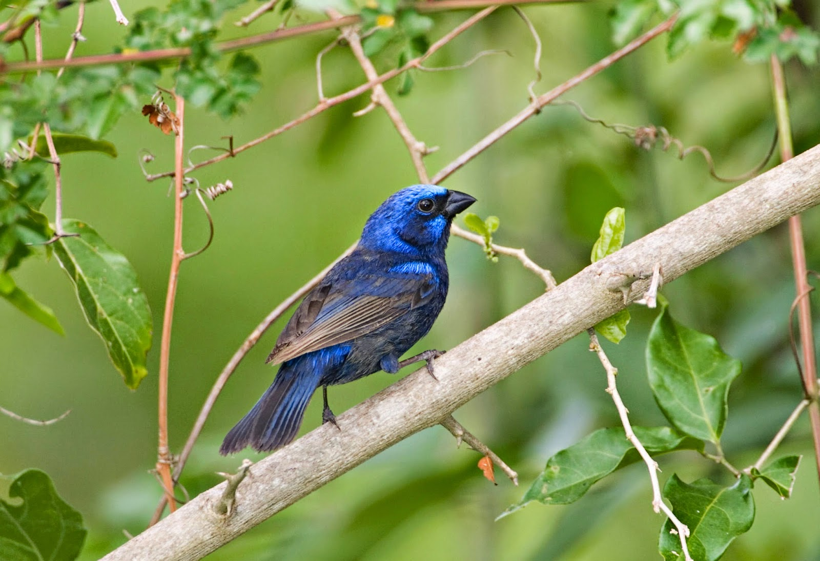 10 fascinating blue colored birds