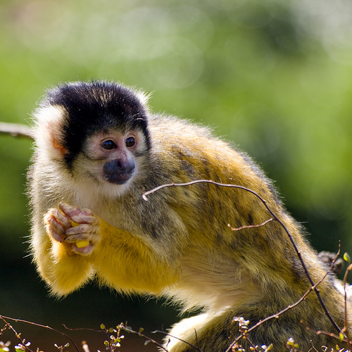 The worlds most beautiful and colorful monkeys photo link voltagebd Image collections