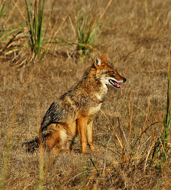 The Carnivores: The Most Exciting and Graceful Animals on ...
