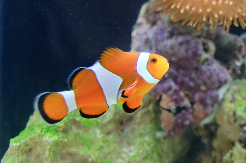 Very Rare Sea Animals Ten Most Beautiful and...