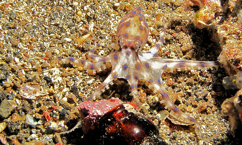The World's Most Colorful Aquatic Animals