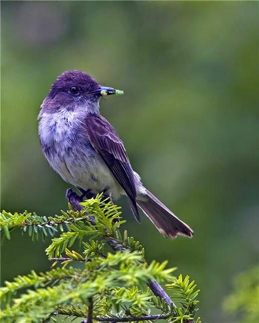 10 Striking Purple Colored Birds on Some Texas Love