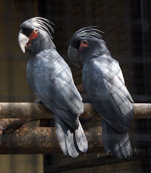 The World's Amazing Birds