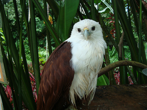 Top 50 Critically Endangered Animals in the Philippines ... |The Philippines Animal