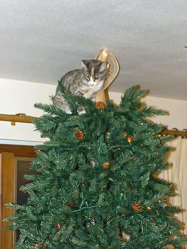 decorate your christmas tree with cats. Black Bedroom Furniture Sets. Home Design Ideas