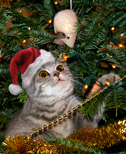 Image result for cat toys under christmas tree""