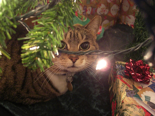 decorate your christmas tree with cats - How To Keep Cat Away From Christmas Tree