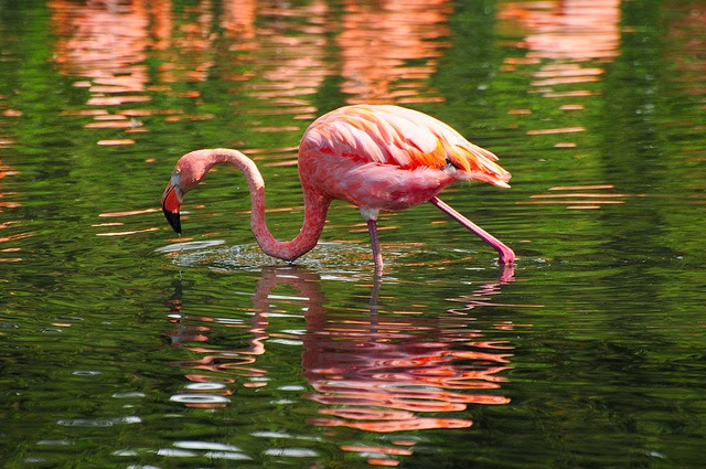 10 Dazzling Pink Colored Birds
