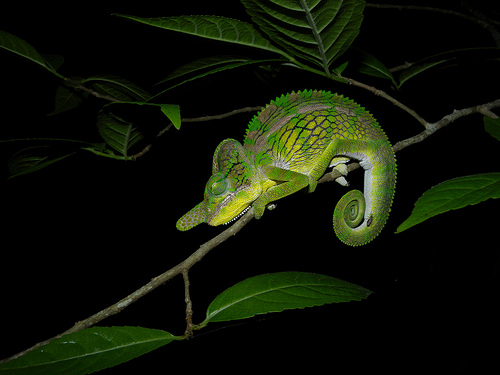 Seven Amazing Color changing and Shape shifting Animals