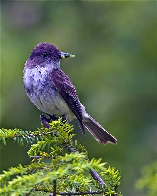 10 Striking Purple Colored Birds