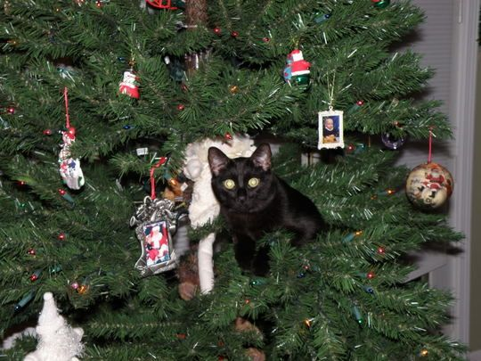 Decorate Your Christmas Tree With Cats